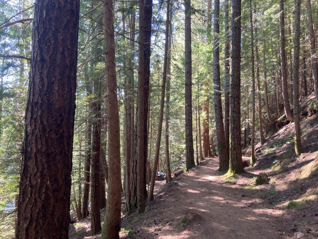 Trail through the tall trees around the lake, the shortest of the Cat Lake hikes