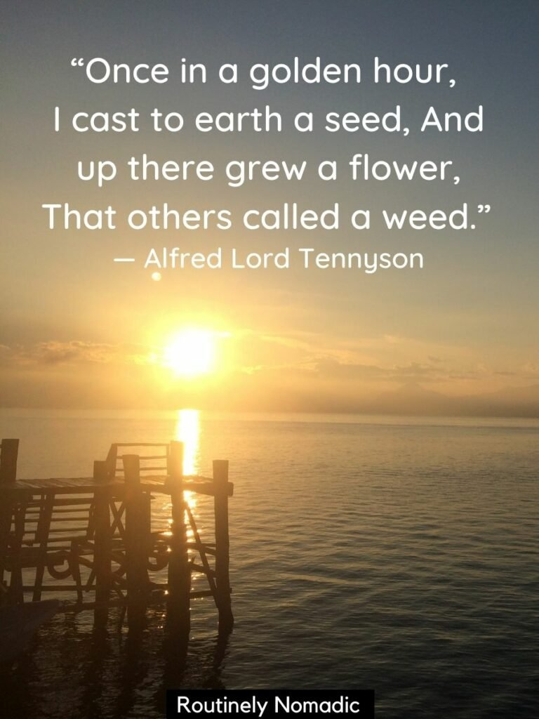 A dock on a lake with the sun rising behind it with a golden hour quotes from Alfred Lord Tennyson