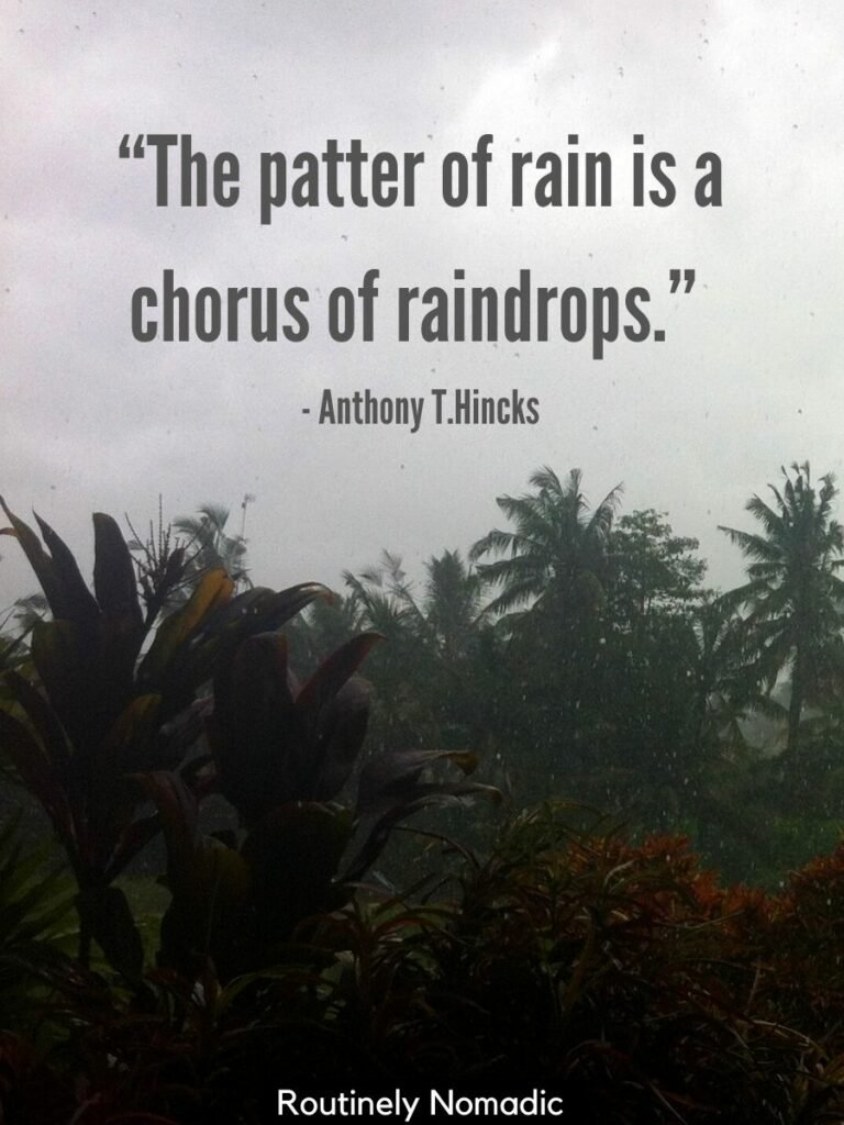 Rain falling on palm trees with a raindrops quotes that says the patter of rain is a chorus of raindrops
