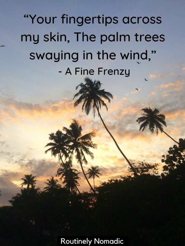 Palm trees silhouetted against sunset sky with a short quotes about palm trees for instagram by A Fine Frenzy