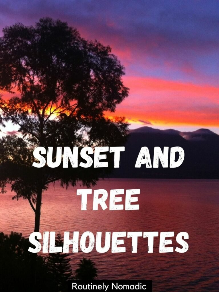 Red and purple sunset with a tree silhouetted on top with a tree captions for Instagram that reads sunset and tree silhouettes