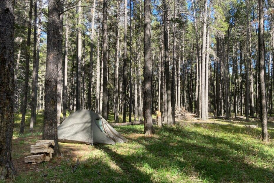 Tent in the trees at Cypress Hills camping Saskatchewan