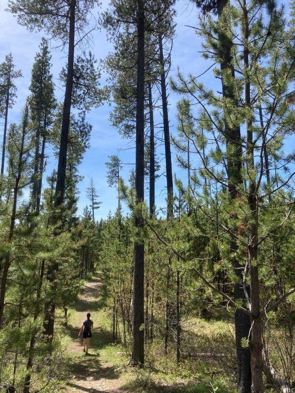 Woman hiking on trail with tall trees at Cypress Hills Saskatchewan