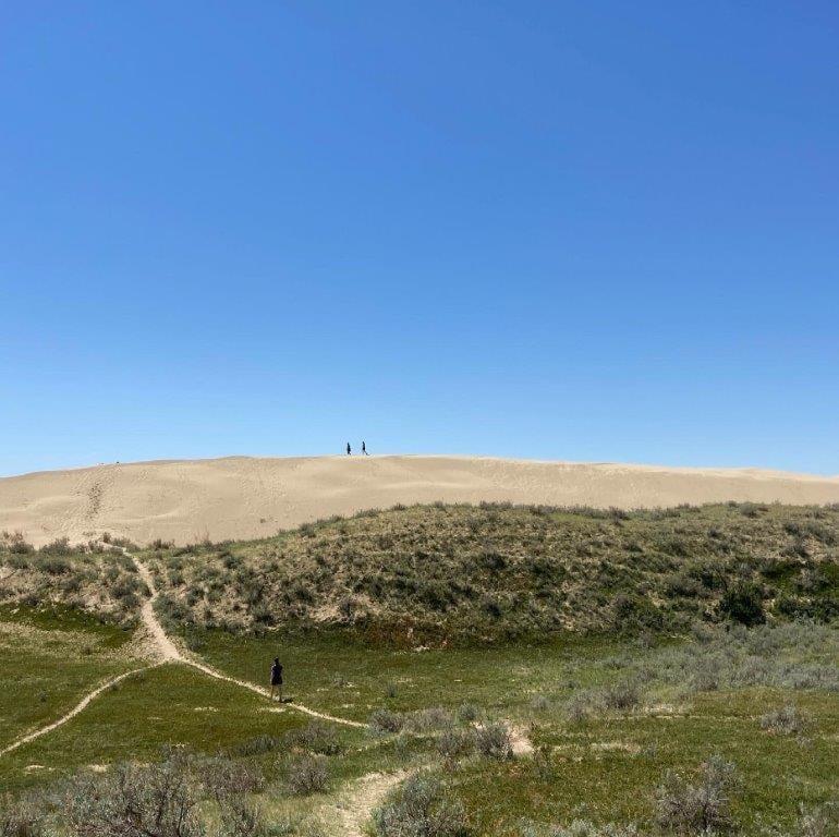 Person walking on trail toward sand dune at the great sandhills Saskatchewan