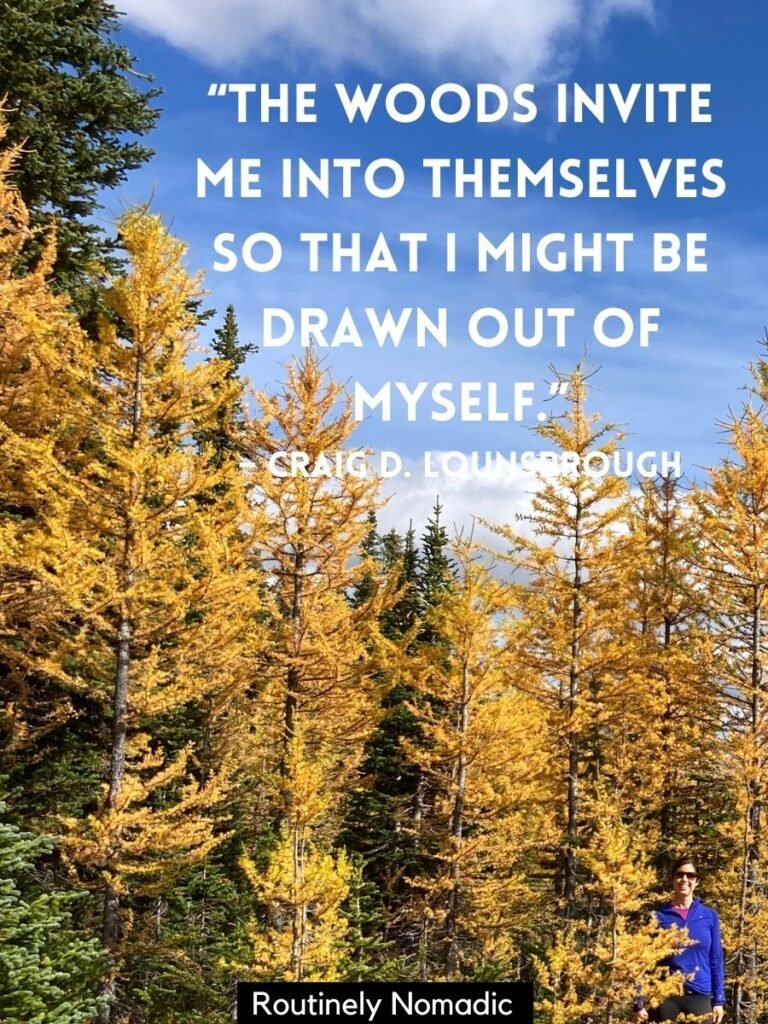Person standing amonst yellow trees with a walking in the woods quotes on top