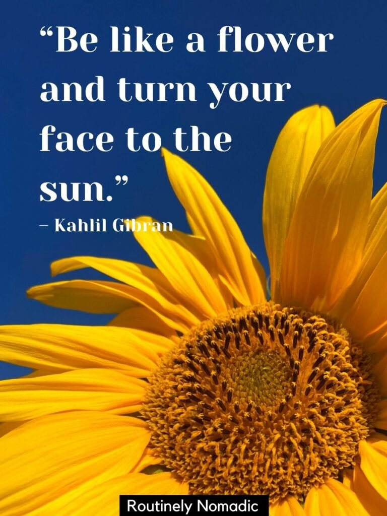 Sunflower and dark blue sky and a be like a sunflower quotes that reads be like a flower and turn your face to the sun