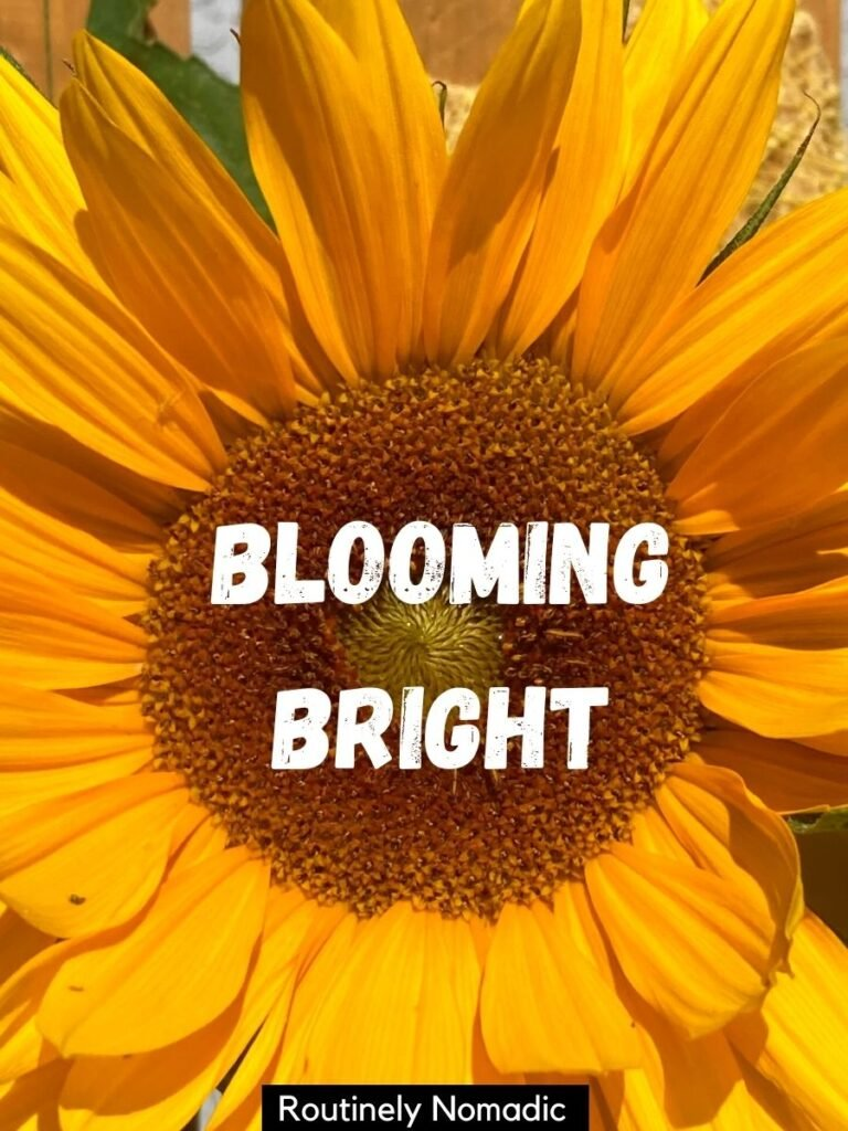 A orange sunflower closeup with a clever sunflower instagram captions that reads blooming bright