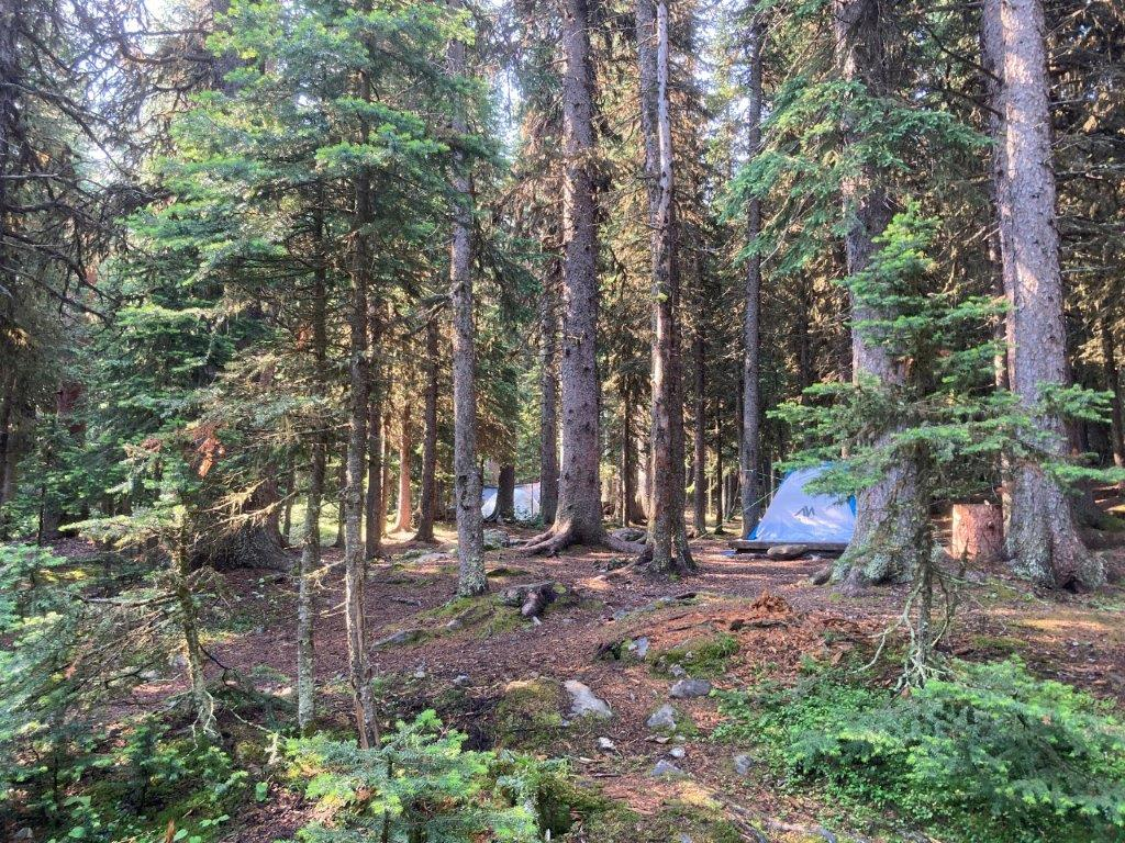 Tent in the trees at the Elbow Lake Campground