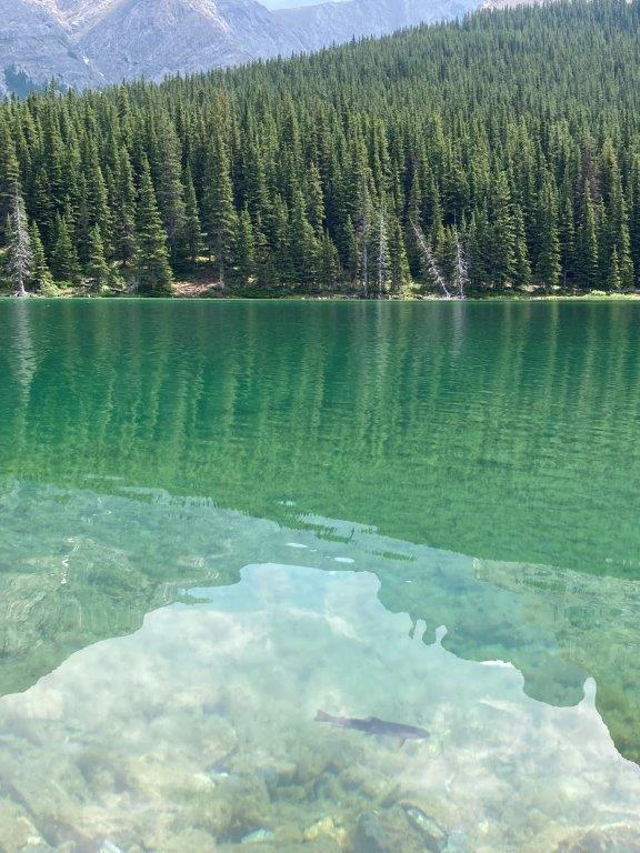 A fish in clear water perfect for Elbow Lake Fishing
