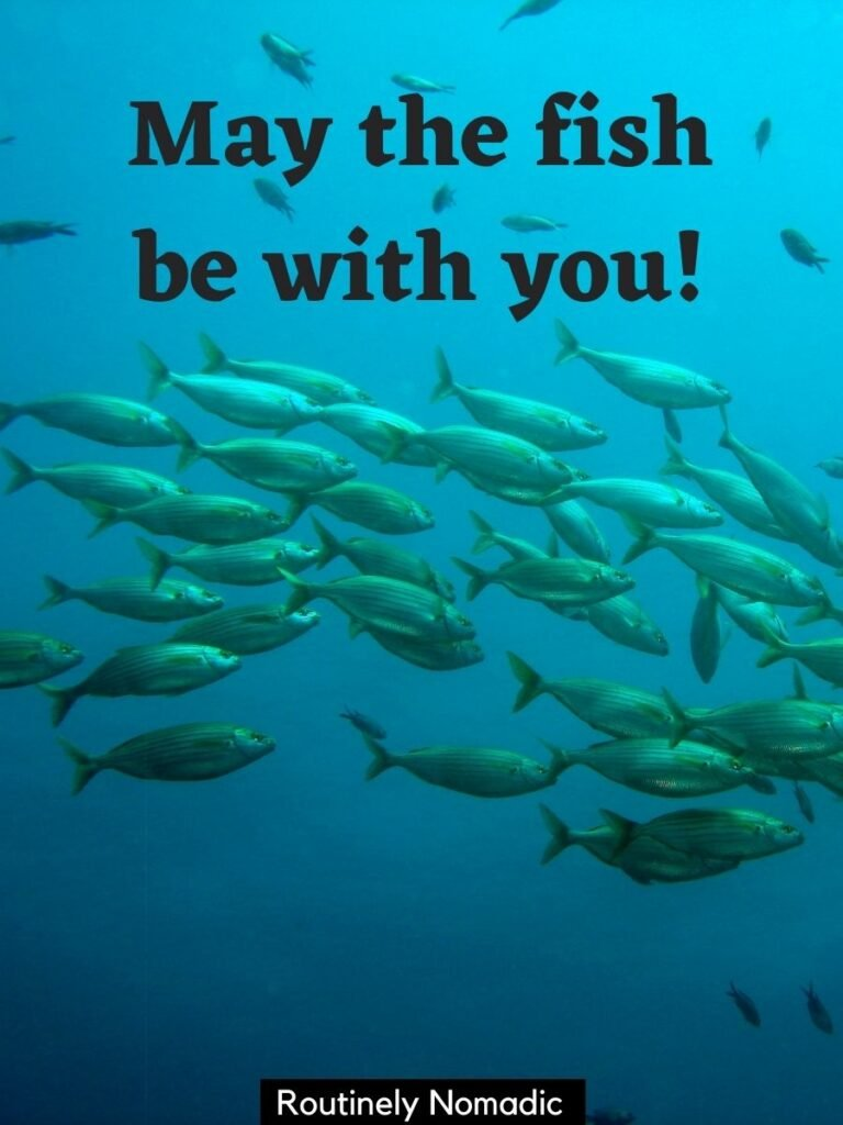 School of fish in the ocean with a fish captions that reads may the fish be with you!