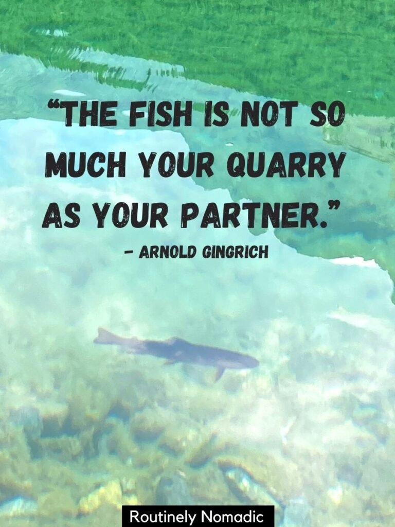 Fish swimming in clear water with a fish quotes on top