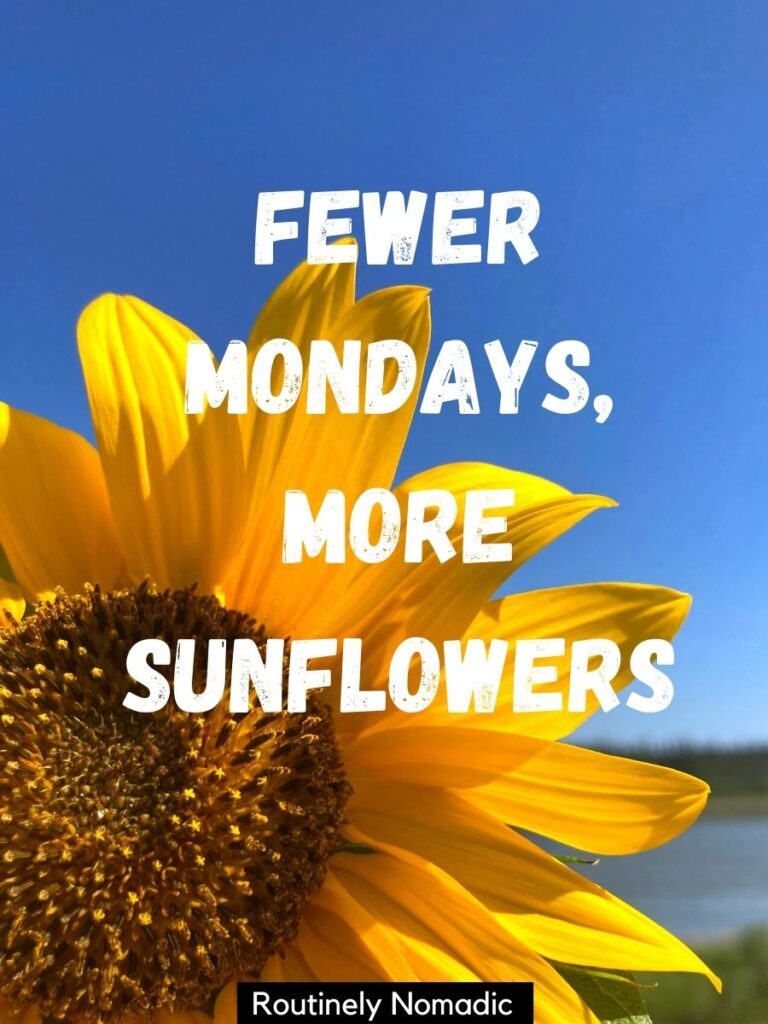 Sunflower with a blue sky background and a funny sunflower captions that reads fewer Mondays, more sunflowers
