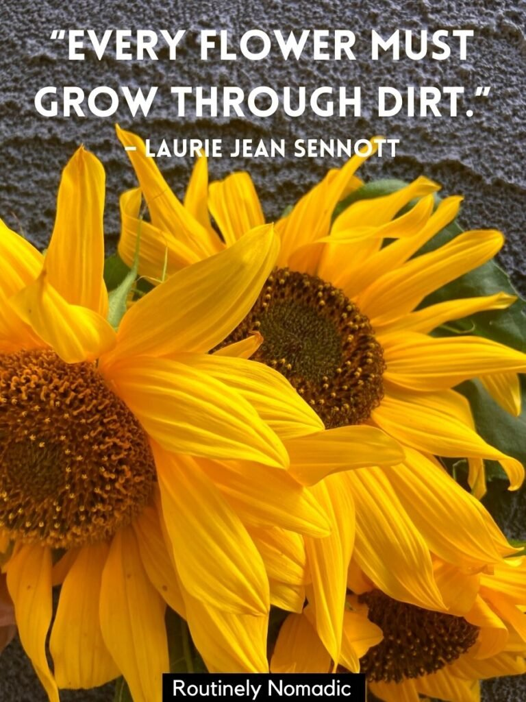 Three sunflowers and a hippie sunflower quotes that reads every flower must grow through dirt
