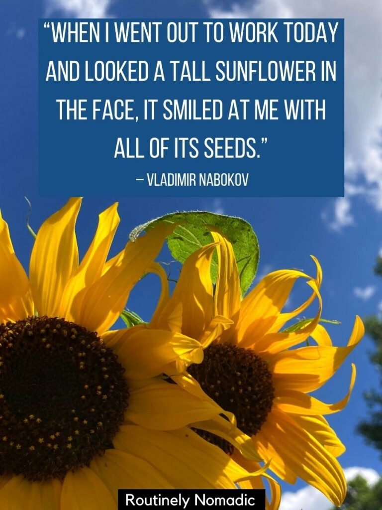 two sunflowers and a funny sunflower quotes by Vladimir Nabokov