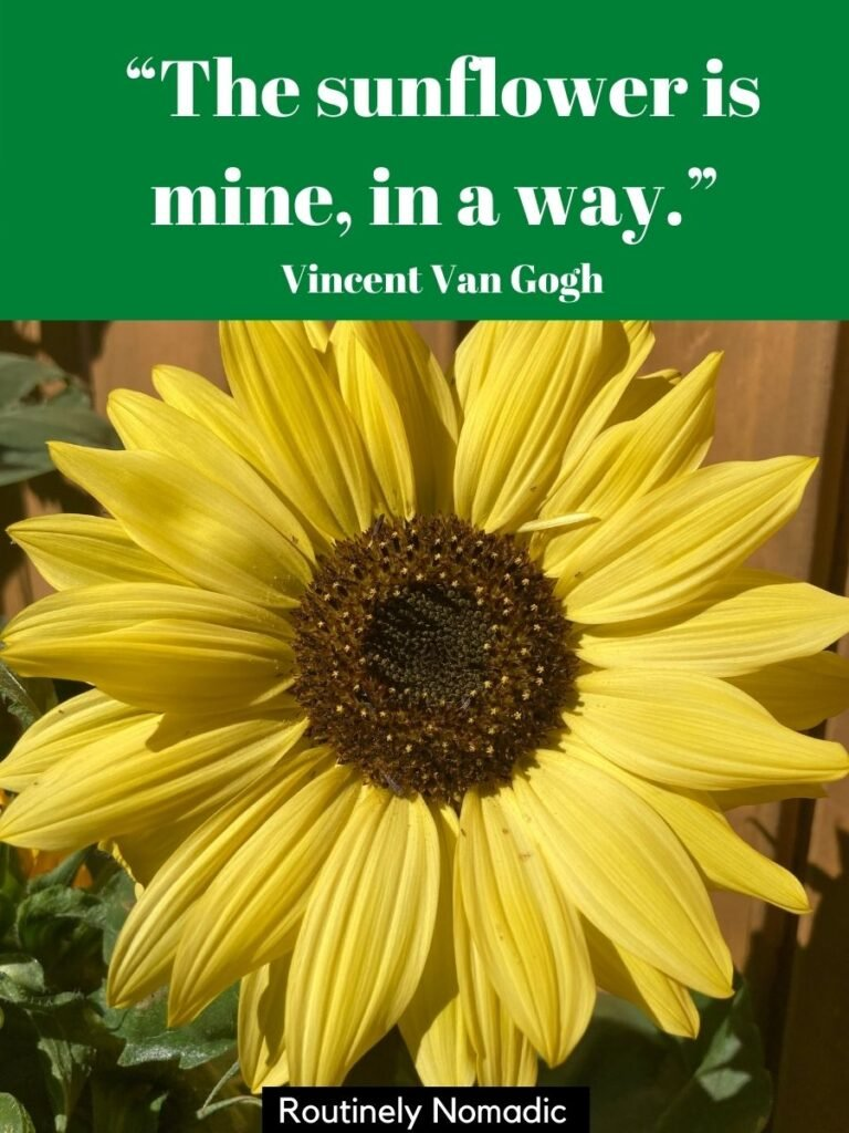 Yellow sunflower close up with a short sunflower quotes for Instagram by Vincent Van Gogh