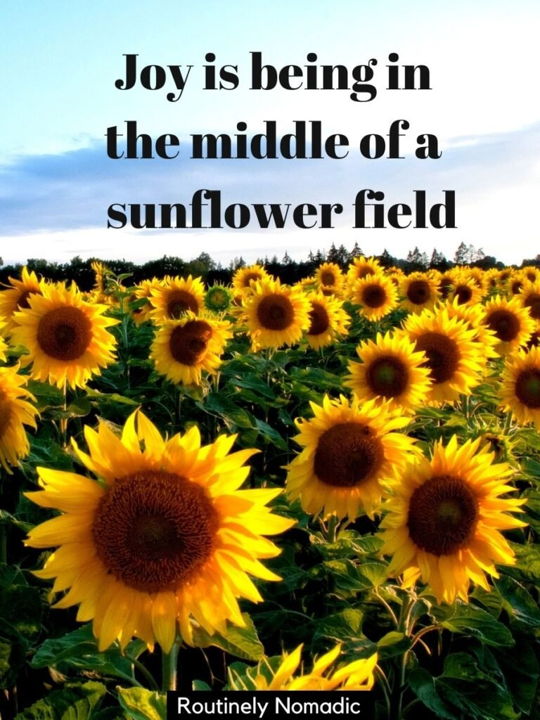 A field of sunflowers with a sunflower field captions that reads joy is being in the middle of a sunflower field