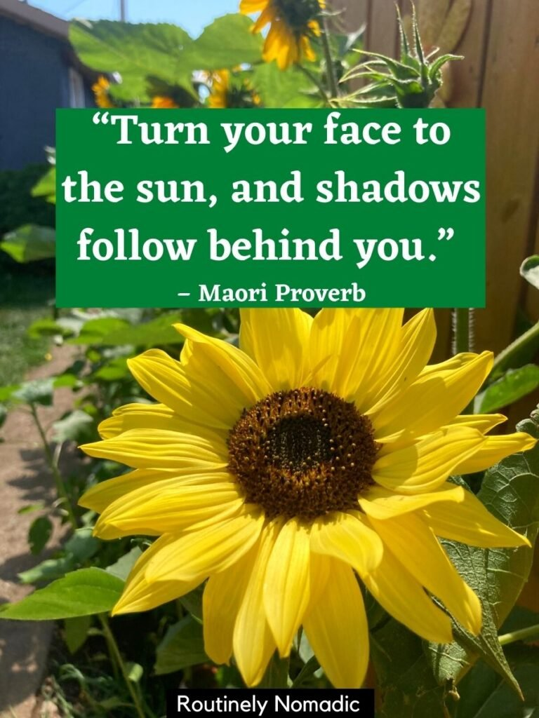 closeup of one flower with more in background with a sunflower inspirational quotes that reads turn your face to the sun and shadows follow behind you.