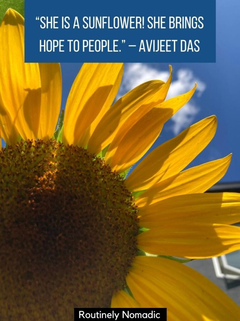 Closeup of sunflower with a sunflower quotes for her that reads she is a sunflower she brings hope to people
