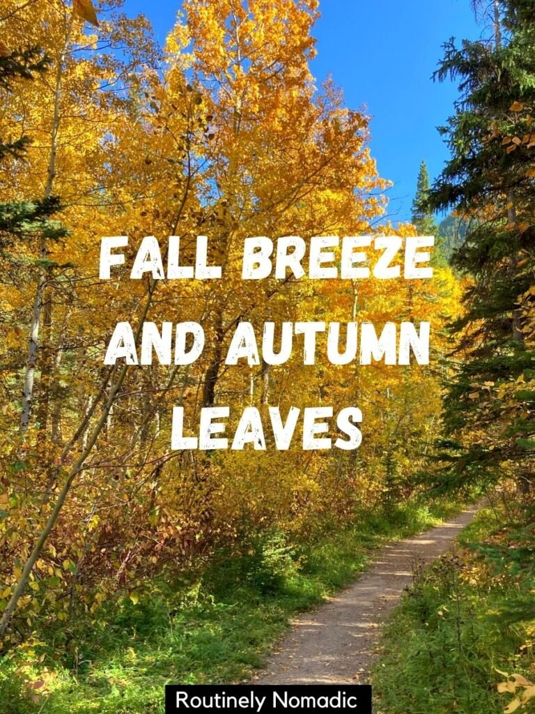 Path through yellow trees with autumn captions that reads fall breeze and autumn leaves