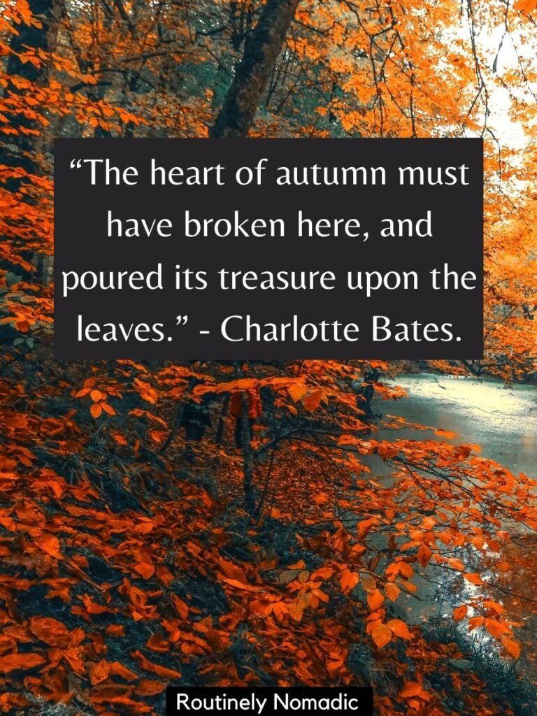 Yellow and orange leaves with a autumn leaves quotes by Charlotte Bates