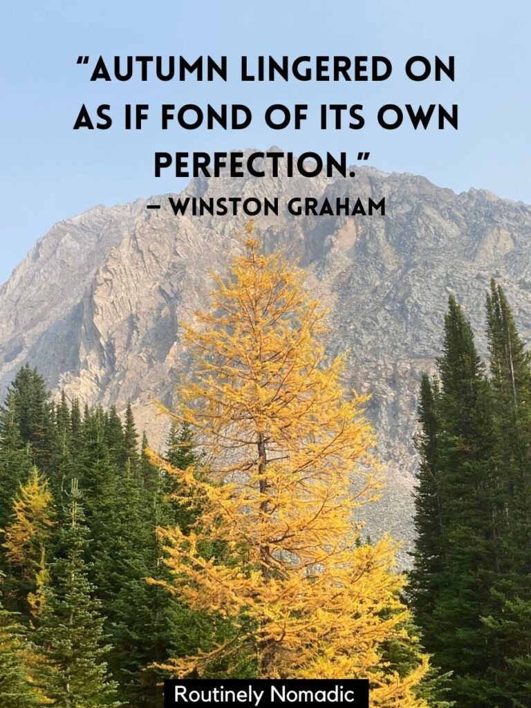 Yellow larch in front of a mountain with a short autumn quotes by Winston Graham
