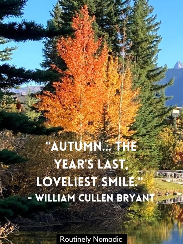 Tree with orange leaves and a cute fall quotes that reads autumn...the year's last loveliest smile