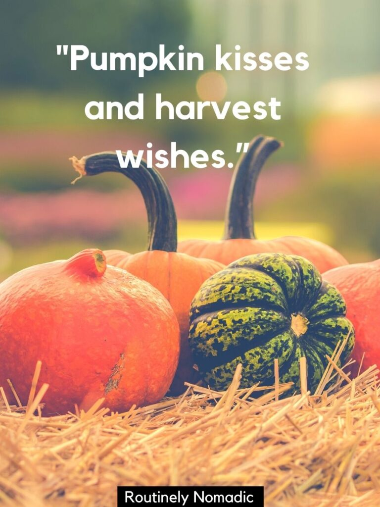 5 pumpkins on a bale and cute Thanksgiving sayings that says pumpkin kisses and harvest wishes