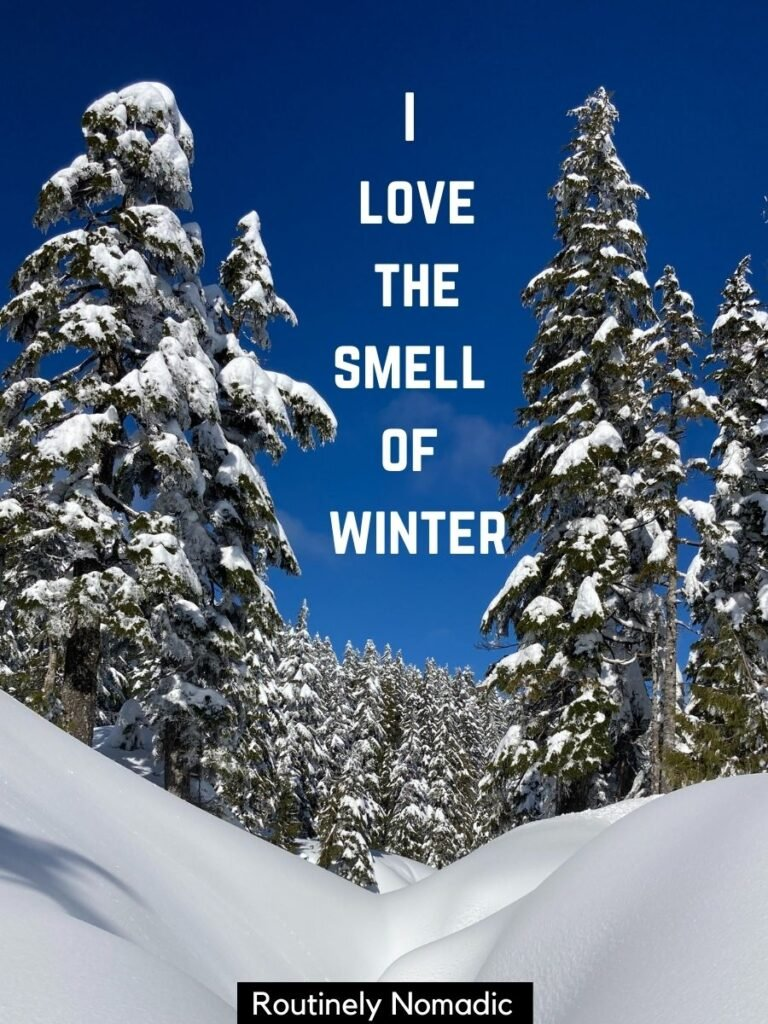 Snow banks and trees with a cute winter captions that says I love the smell of winter