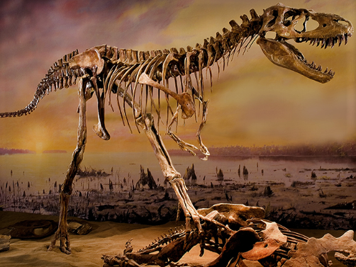 Dinosaur bones at the Drumheller dinosaur museum in Alberta