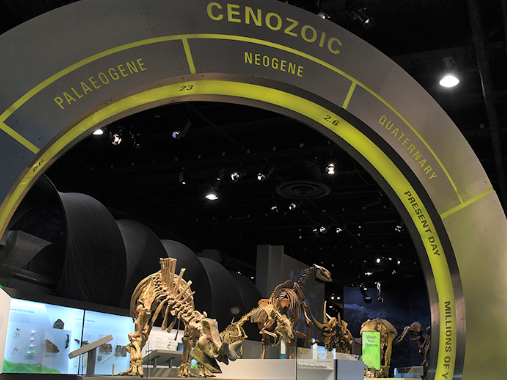 Sign for the Cenozoic era and dinosaur bones at the Drumheller royal tyrrell museum of palaeontology