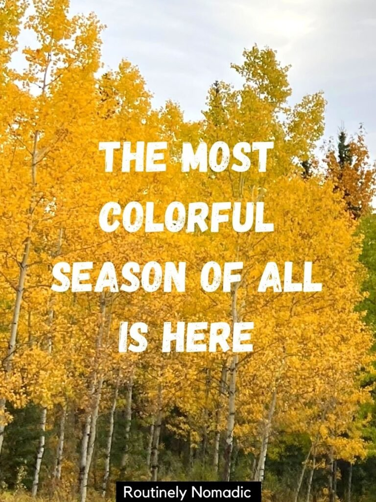 Yellow trees with a fall captions that reads the most colorful season of all is here