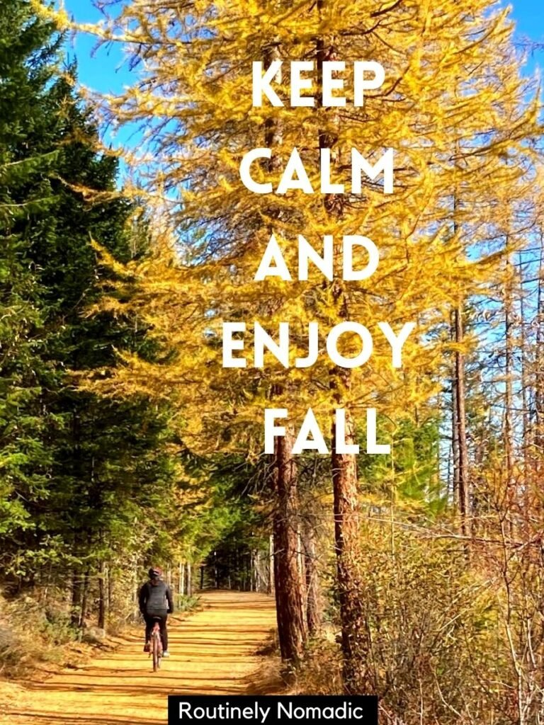 Person riding bike under yellow trees with fall Instagram Captions that reads keep calm and enjoy fall