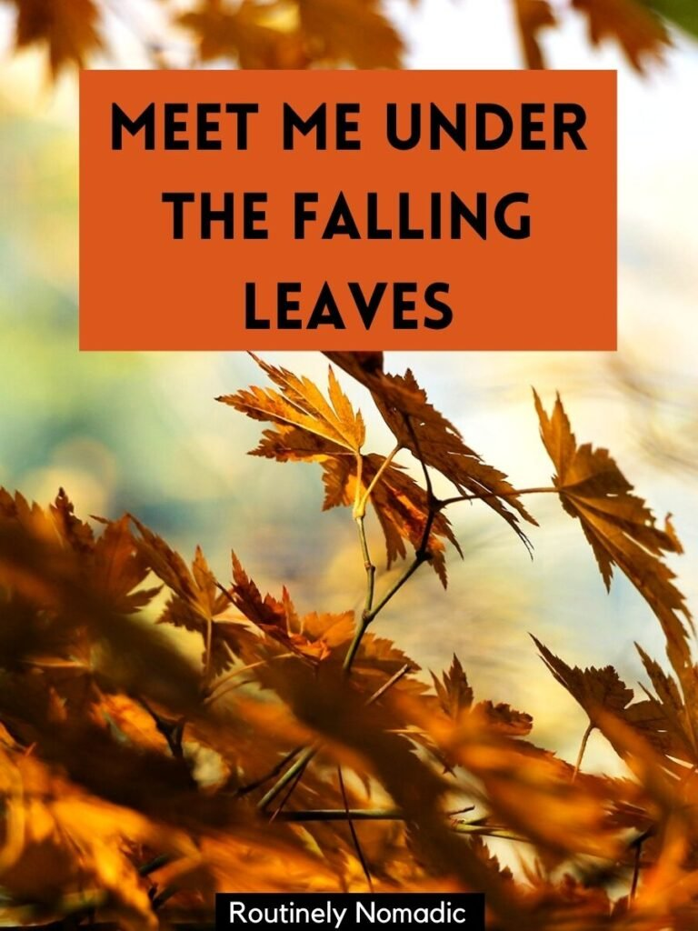Falling fall leaves with a falling leaves caption that reads meeting me under the falling leaves