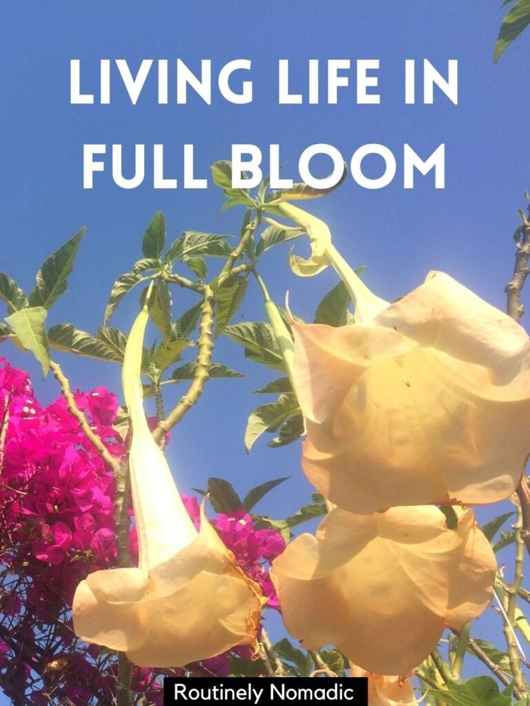 Flowers against a blue sky and flower captions that says living life in full bloom
