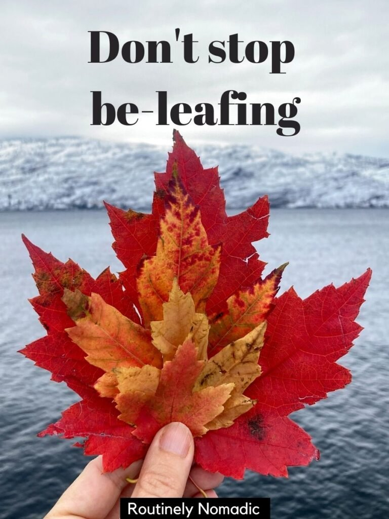 Four red canadian leaves held in a hand with a funny fall captions that reads don't stop be-leafing