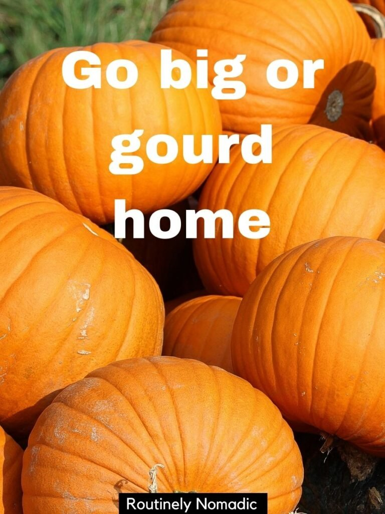 pile of pumpkins with a funny pumpkin patch captions that reads go big or go home