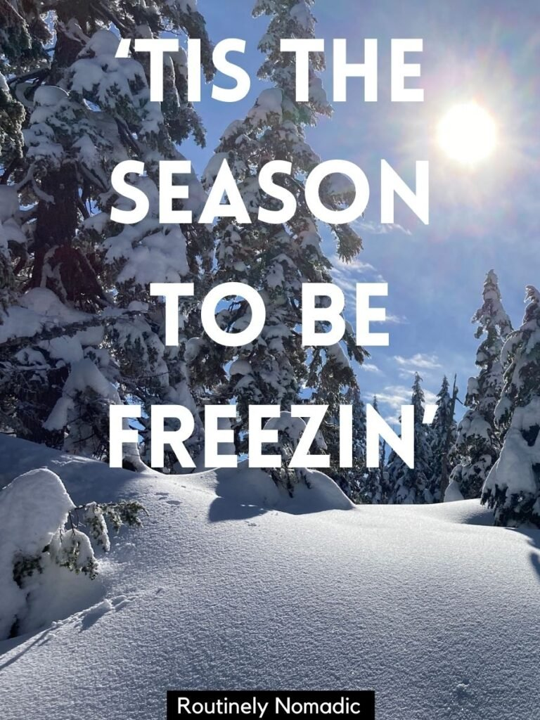 Snow covered ground and trees with a funny winter captions that reads tis the season to be freezin