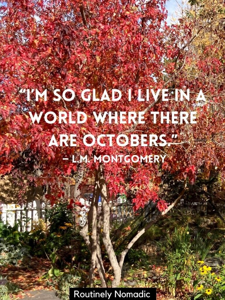 Tree with red leaves and a happy fall quotes that reads I'm so glad I live in a world where there are octobers