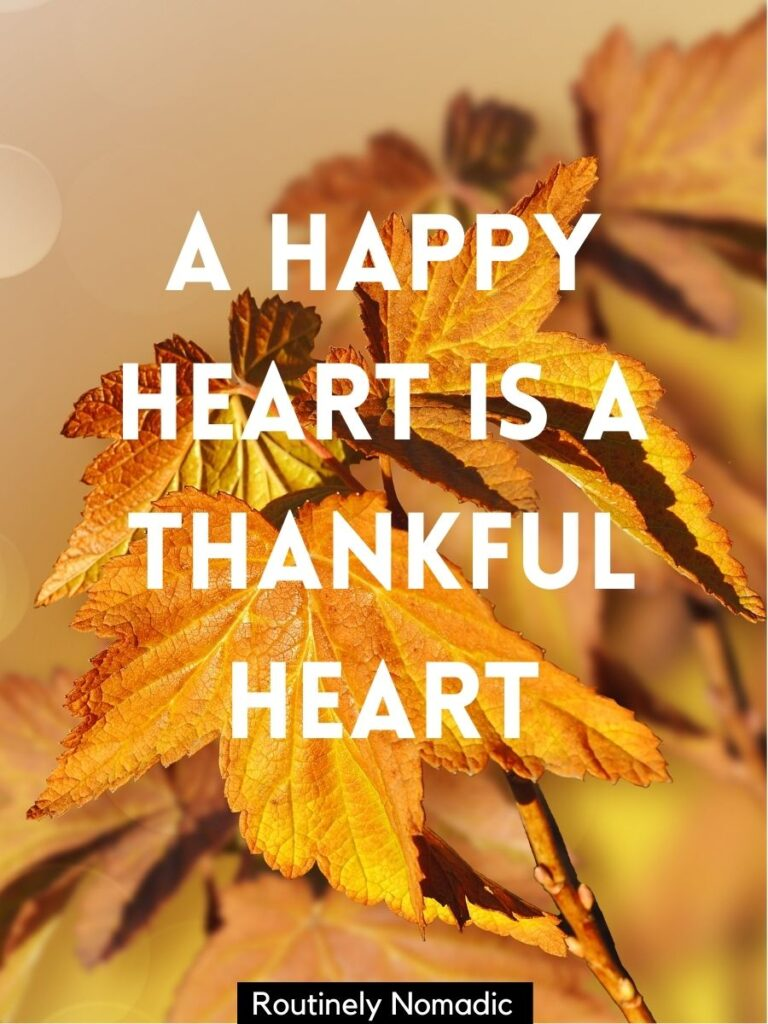 Fall leaves with a happy Thanksgiving captions that says a happy heart is a thankful heart