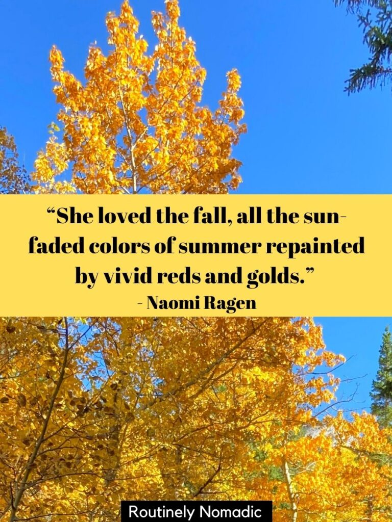 Yellow tree and blue sky with a love fall quotes by Naomi Ragen