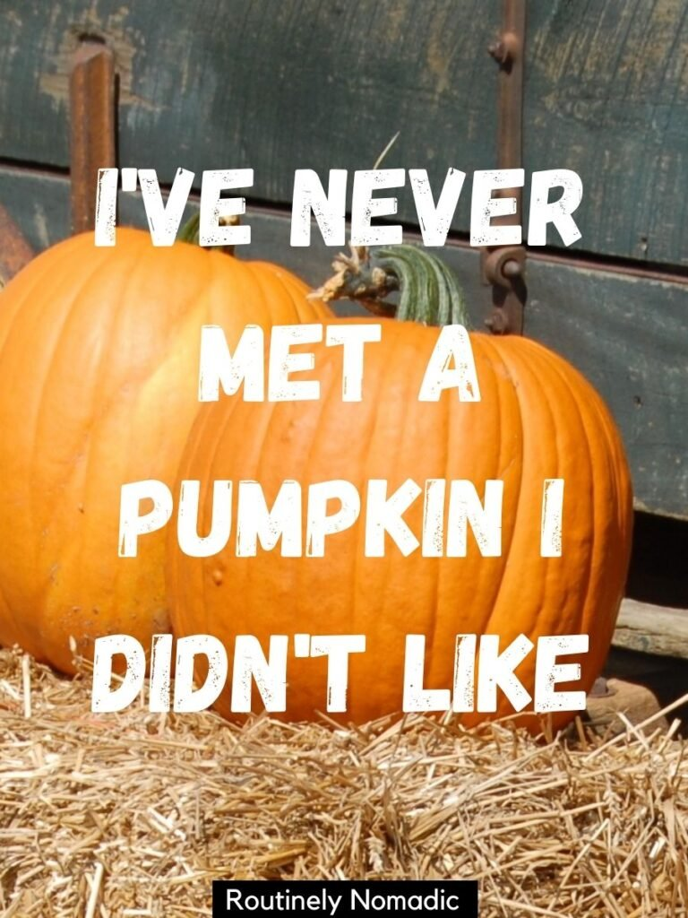 two pumpkins on a hay bale with pumkin captions that reads I've never met a pumpkin I didn't like