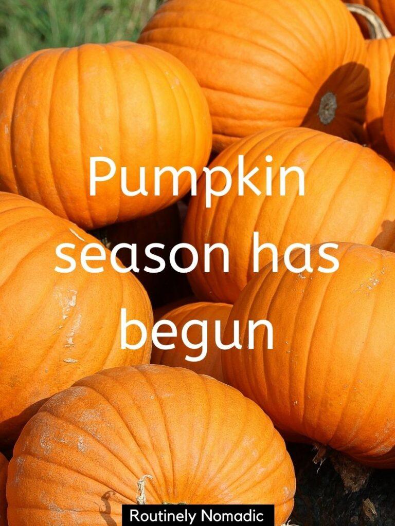 Pile of pumpkins with a pumpkin Instagram captions that reads pumpkin season has begun