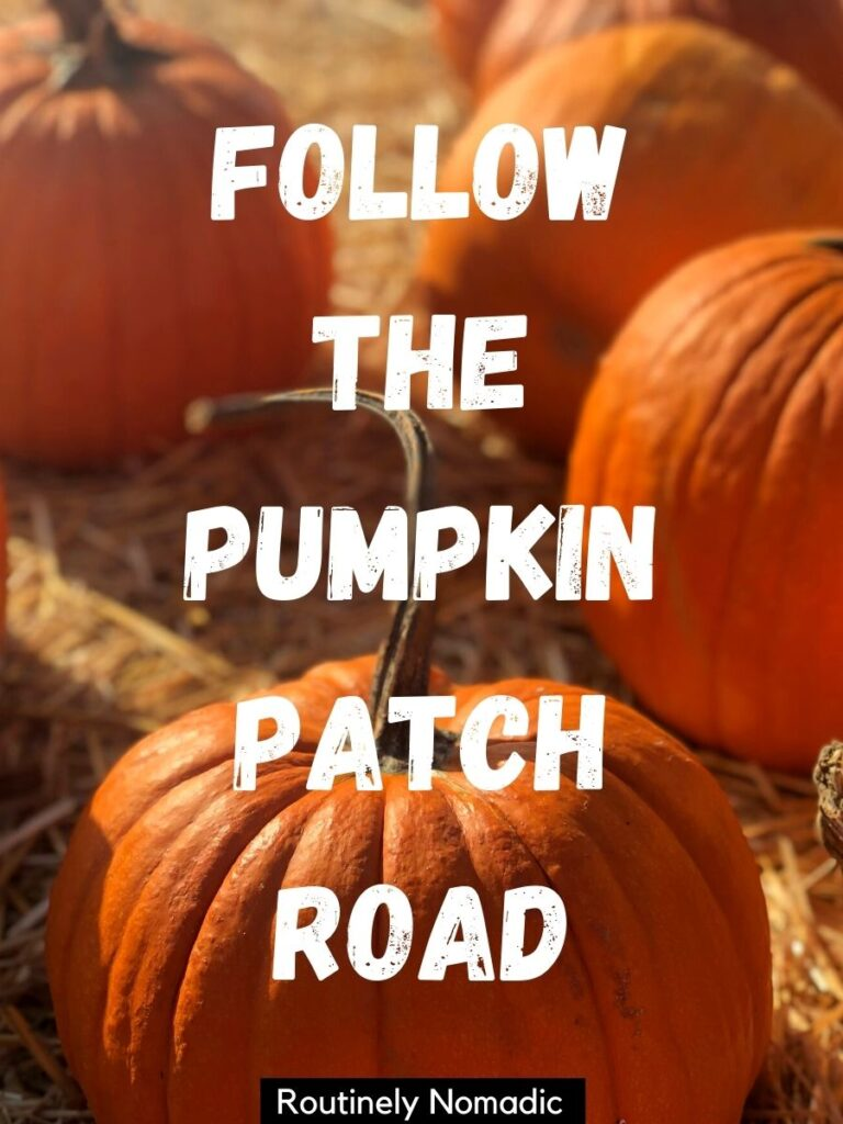 Four pumpkins on straw with a pumpkin patch Instagram captions that reads follow the pumpkin patch road