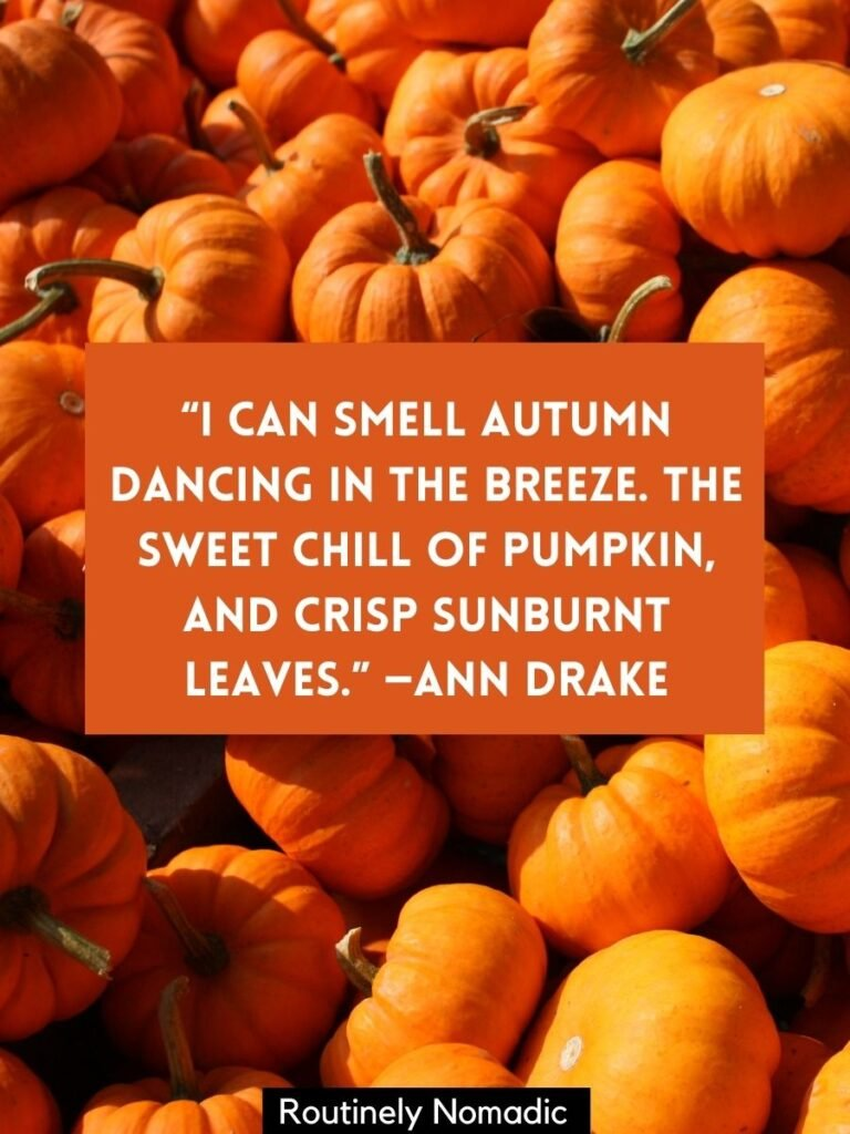 Pile of pumpkins with a pumpkin quotes for Instagram on top by Ann Drake