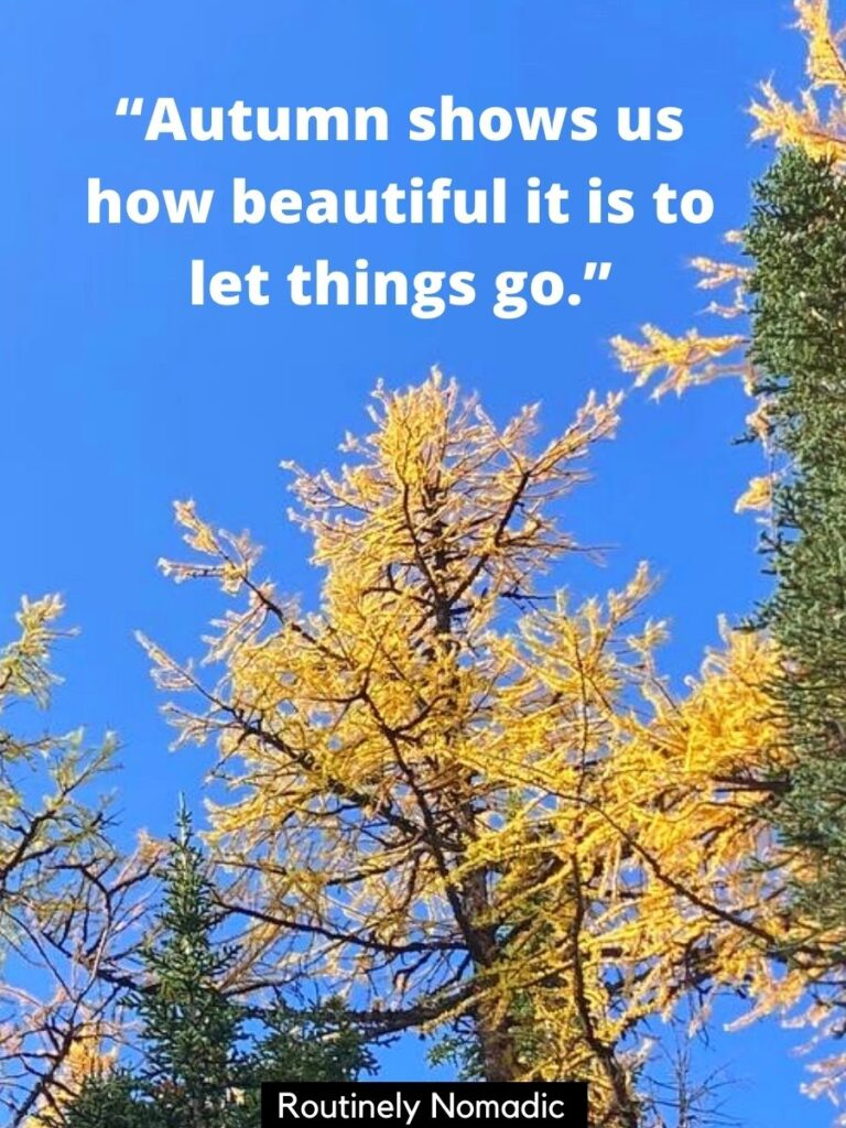 Yellow tree and blue sky with a quotes about fall that reads autumn shows us how beautiful it is to let things go
