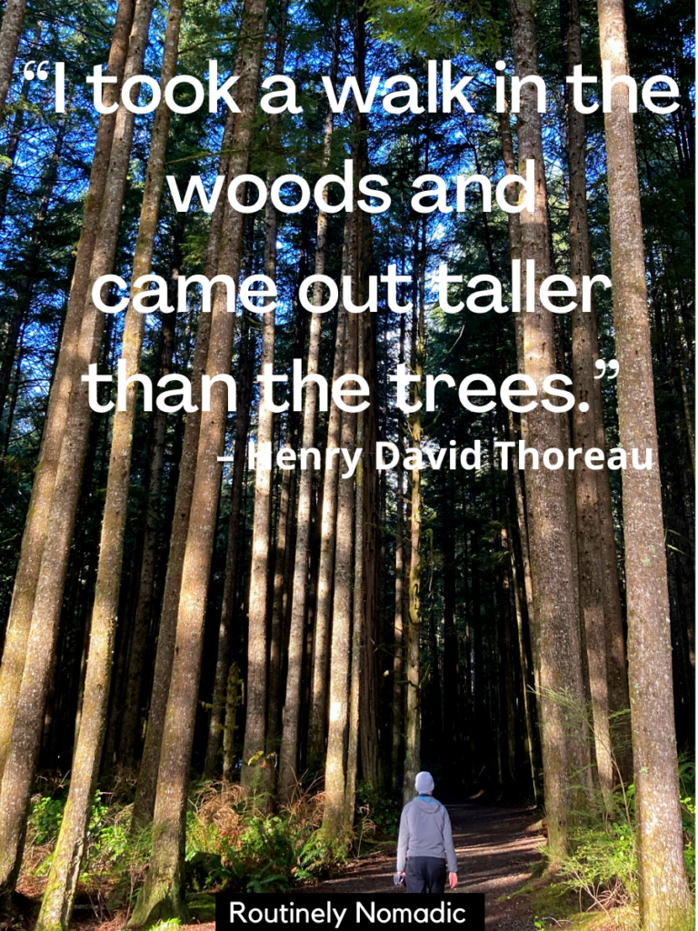 Person walking down trail with tall trees and a quotes about walking in the woods that reads I took a walk in the woods and came out taller than the trees.