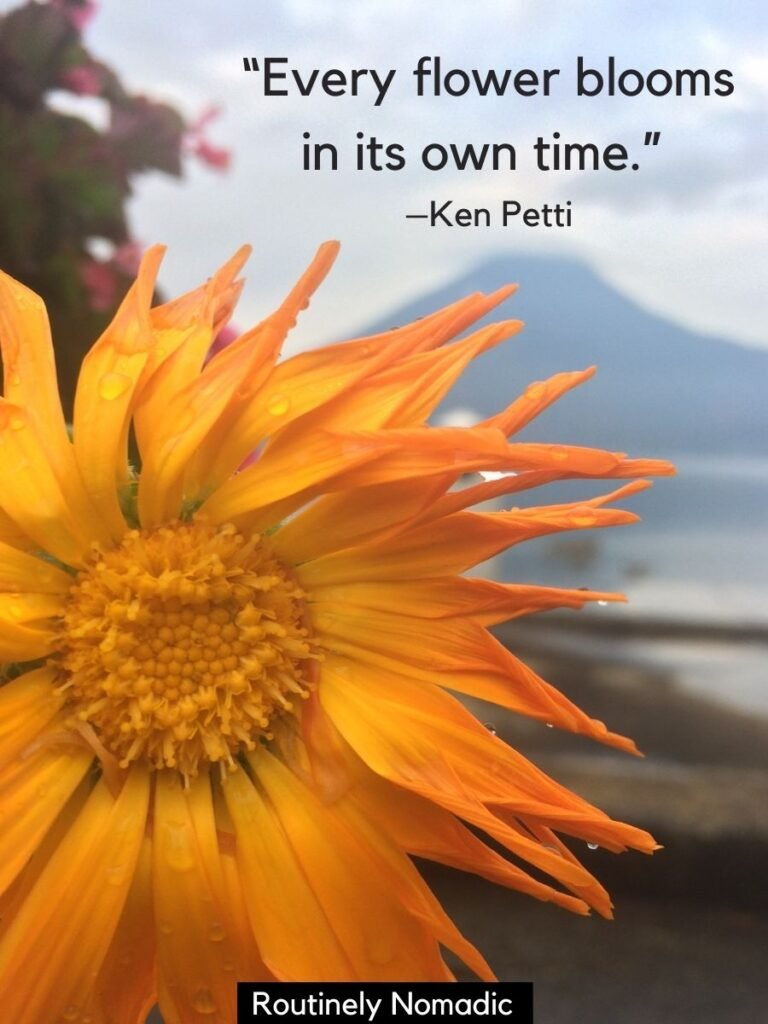 Yellow flower in front of volcano and lake with short flower quotes by Ken Petti