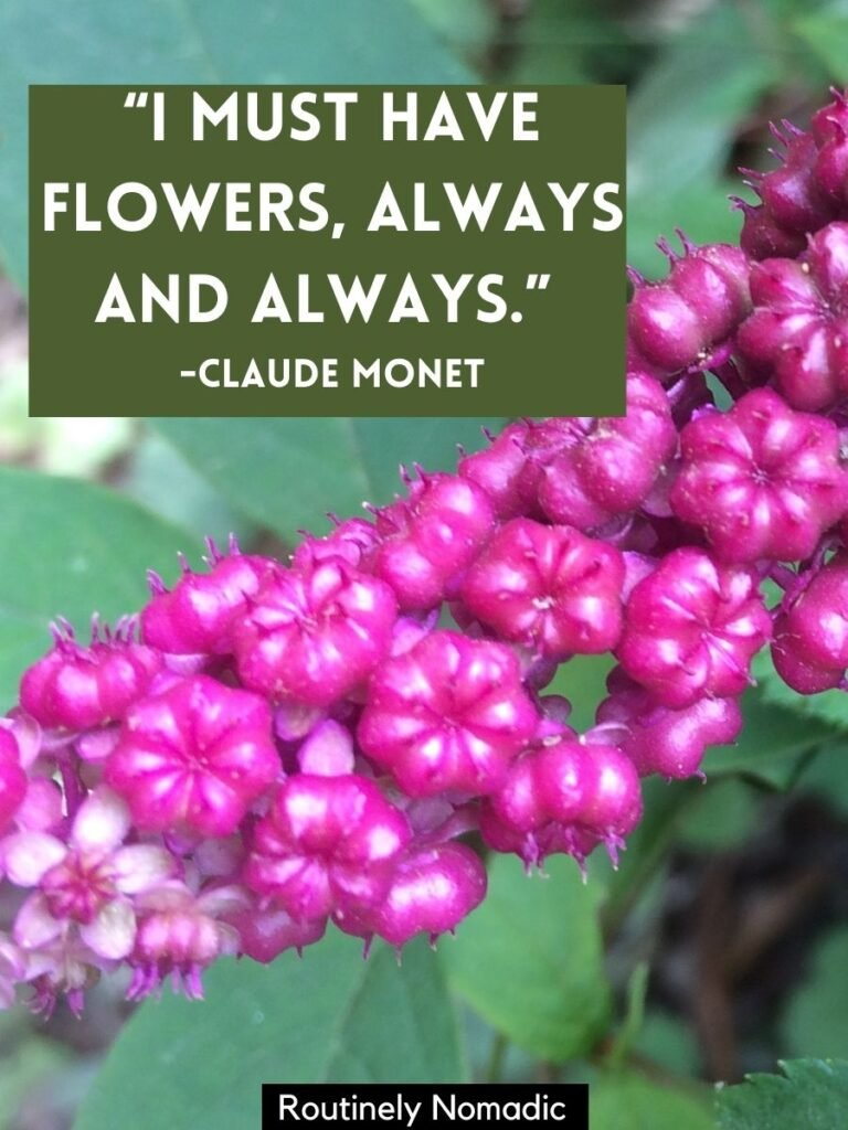 Purple buds just starting to bloom with short flower quotes for Instagram by Claude Monet