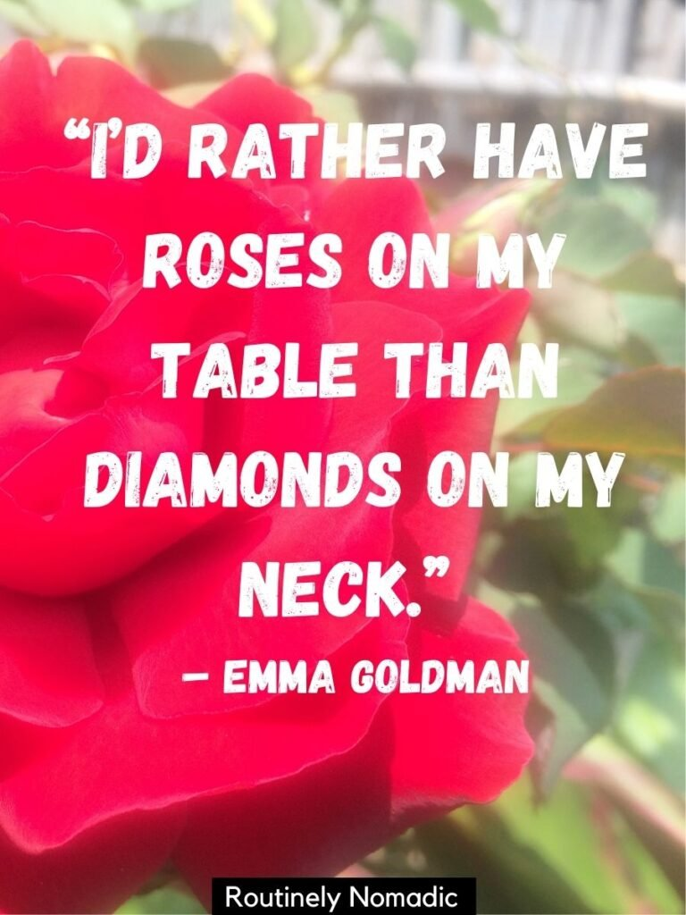 Close up of a rose with short rose quotes by Emma Goldman