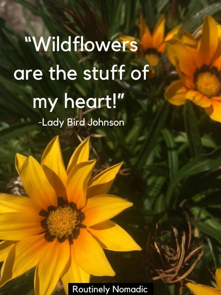Yellow flowers with a short wildflowers quotes by Lady Bird Johnson